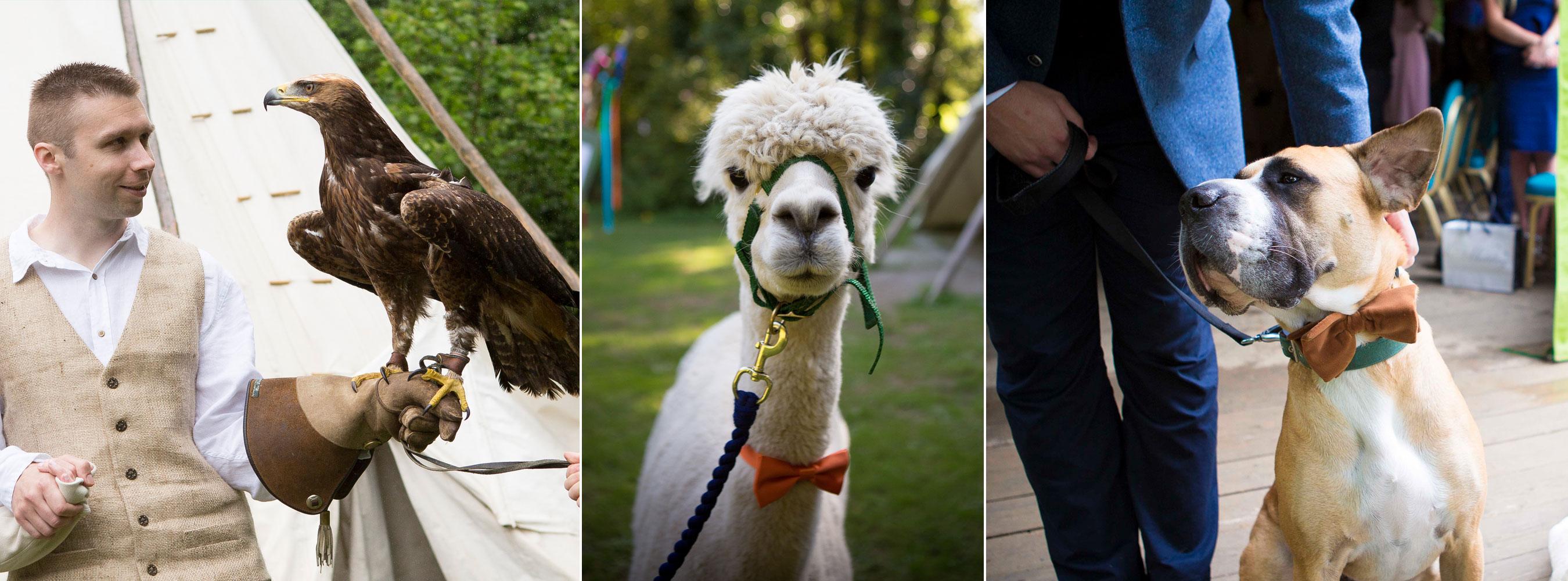 Ring Dogs Eagle Alpacas