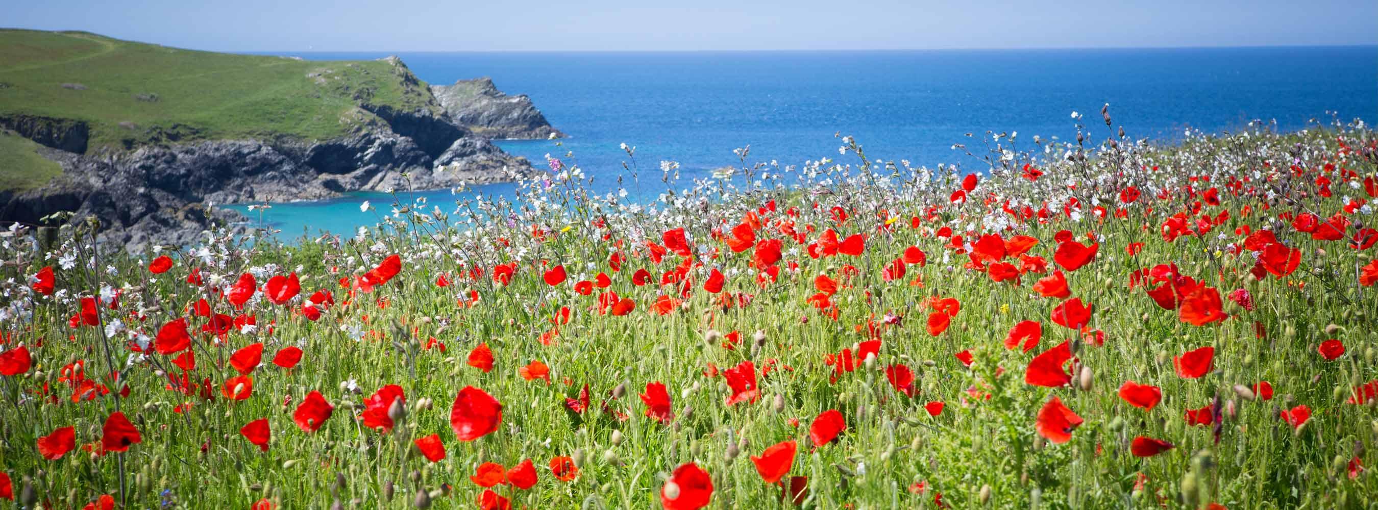 Location Poly Joke Coastal Poppies